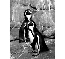 Black and White Penguin Two Photographic Print