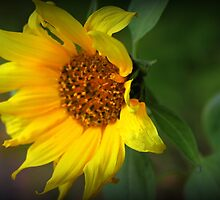 Sunflower by debp0503