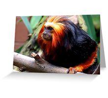Golden-Headed Lion Tamarin One Greeting Card