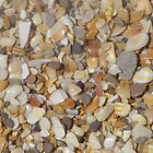 Shells, shells, everywhere by Caroline Clarkson