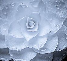 Moonlit Camellia by LadyEloise