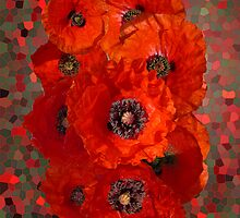 Poppies by nigelchaloner