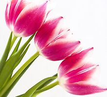 Pink Tulips by Joanne Wilde