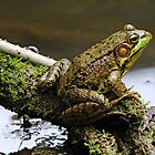 Content Frog by Debbie Oppermann