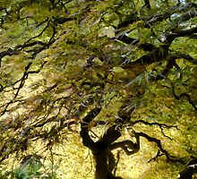 Magical Tree by Don Schwartz