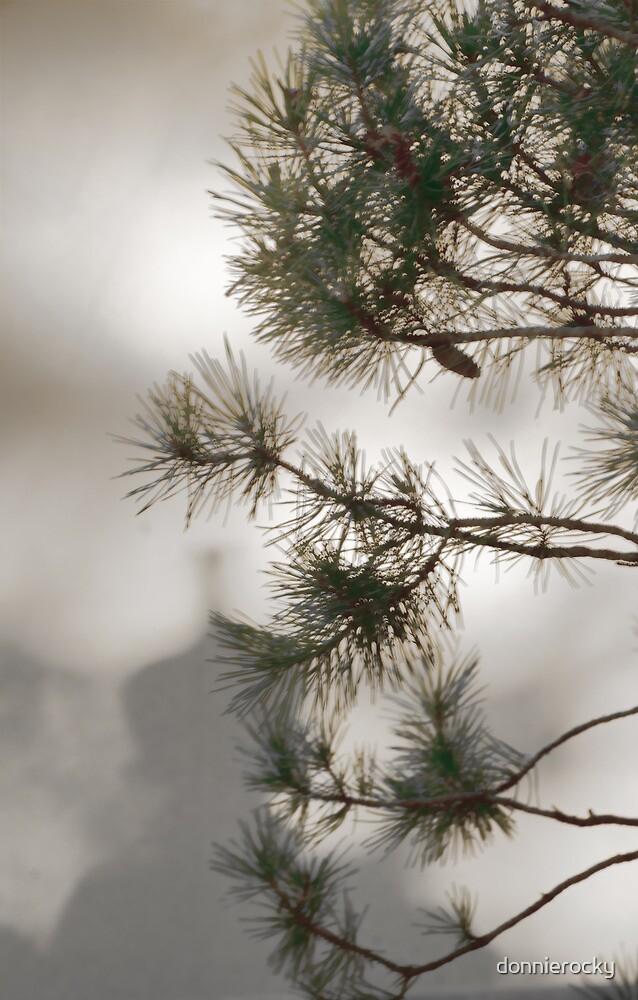Whispering Pine by Don Schwartz