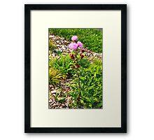 Hairy Purple Flower Framed Print