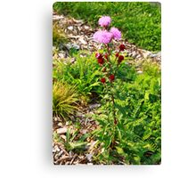Hairy Purple Flower Canvas Print