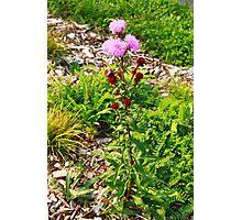 Hairy Purple Flower Photographic Print