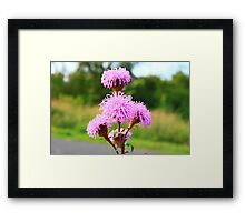 Hairy Purple Flower2 Framed Print