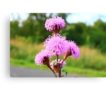 Hairy Purple Flower2 Canvas Print