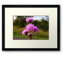 Hairy Purple Flower3 Framed Print