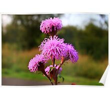 Hairy Purple Flower3 Poster