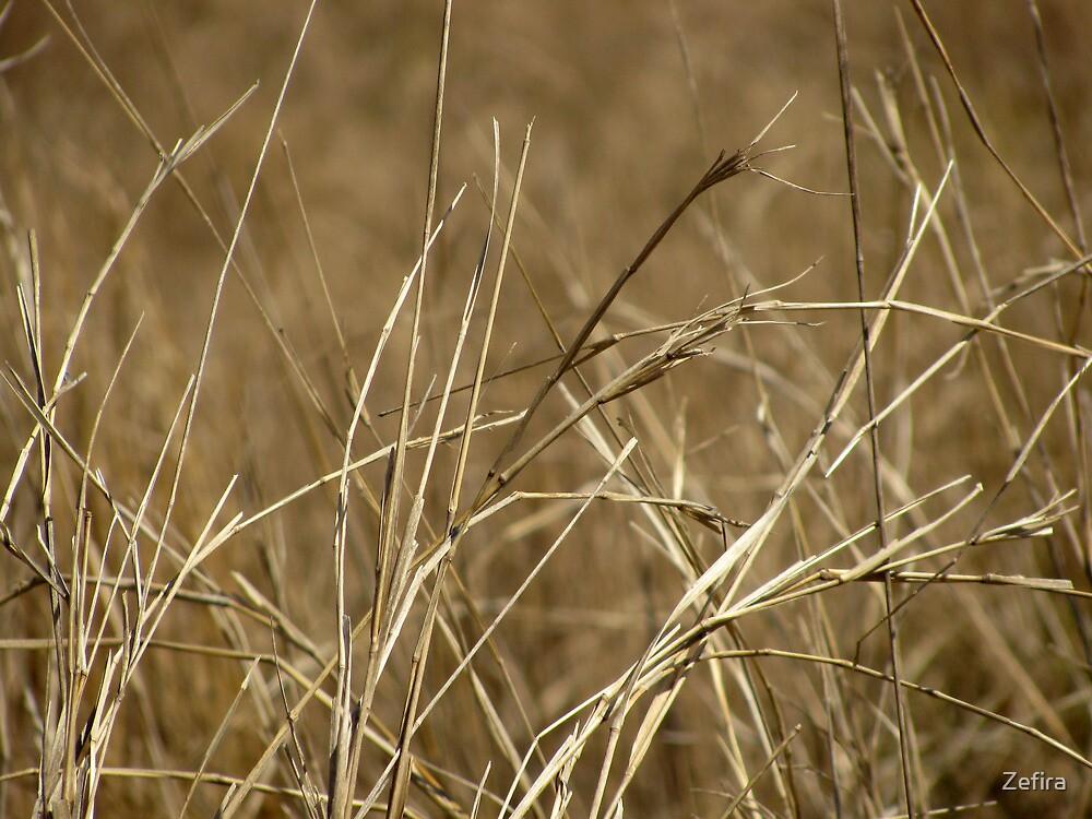 grassland by Zefira