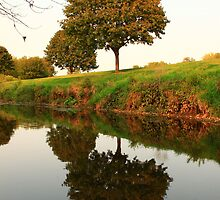 A Reflection in Nature by Adam Kuehl