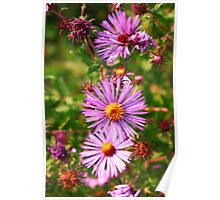 Purple Daisy's  Poster