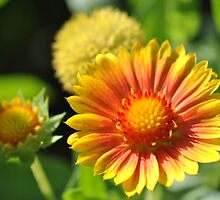 Garden Beauty by savvysisstudio