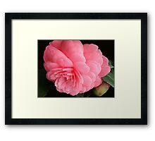 Camellia - Villa Carlotta Framed Print