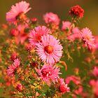 A Beautiful Bouquet by Adam Kuehl