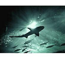 Aquarium Shark in the Spotlight Photographic Print