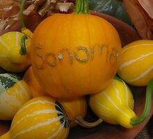 Sonoma County Pumpkin and Gourds by Betty Mackey
