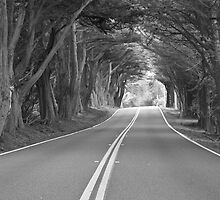 The Road Less Traveled by John Butler