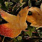 Autumn Crystals by Mary Fox