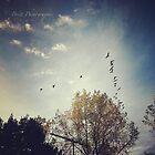 Morning Flight by KBritt