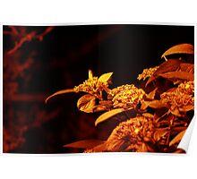 Red NightLight Plant Poster