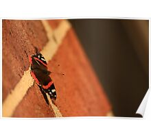 Butterfly on Brick Poster