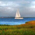 Sailing At Charleston Bay by Kathy Baccari