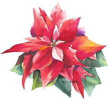Bright Red Poinsettia by Pat Yager