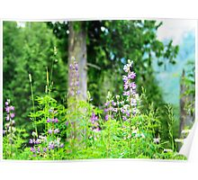 Lupine and view from Mallardy Poster