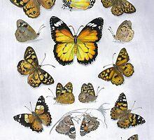 Butterfly study by melhillswildart