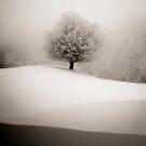 winter degradee by StefaniaC