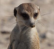 Inquisitive Meercat by SheryleMoon