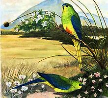 Orange Bellied Parrots by melhillswildart