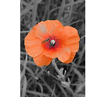 Poppy in the Field Photographic Print