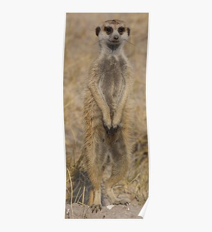 Meercat under Review Poster