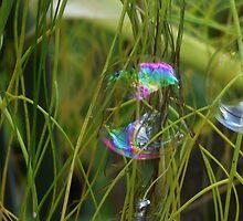 Bubbles by Jacqueline Longhurst