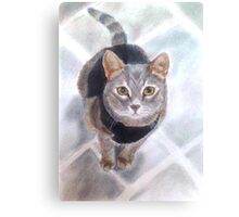 Sweet Little Willow Canvas Print