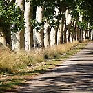 Under the plane trees shadow by Fran0723