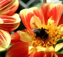 Bee on flower Sticker