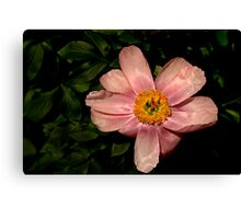 2013 Calendar - Light and Bloom - November Canvas Print