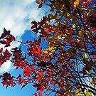 The leaves on the trees by Asrais