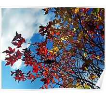 The leaves on the trees Poster