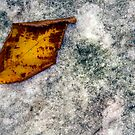 Early Taste Of Fall by David Piszczek