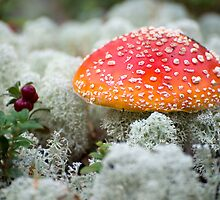 Fly Agaric - 2 by ilpo laurila