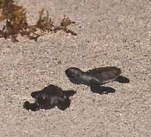 Baby Hawksbill Turtles by LeaGerard