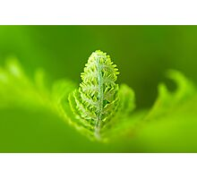 It's a Green, Green World Photographic Print